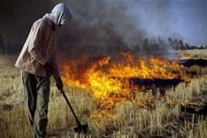 90 درصد مواد مغذی خاک با سوزاندن کاه و کلش کشتزارها  نابودمی شود
