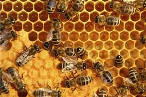 معاون وزیر جهاد کشاورزی: ایرانیها عسل را گرانتر از قیمت جهانی میخرند