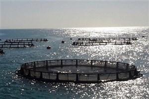 از سوی وزیر جهاد کشاورزی؛ آئیننامه پرورش ماهی در قفس ابلاغ شد