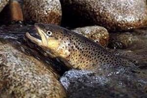 جابجایی زیستگاه ماهیها به دنبال گرمایش جهانی