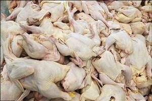 بازار مرغ ایران در عراق و افغانستان  پرپر شد!