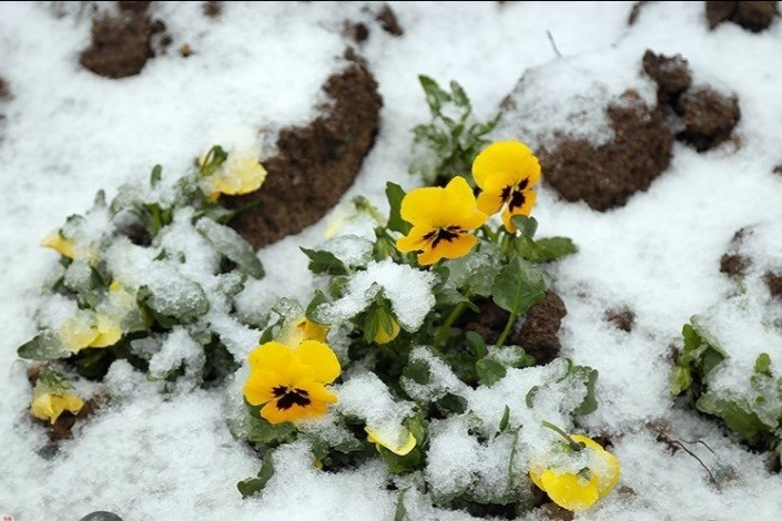 بارش برف در تابستان در کلاردشت