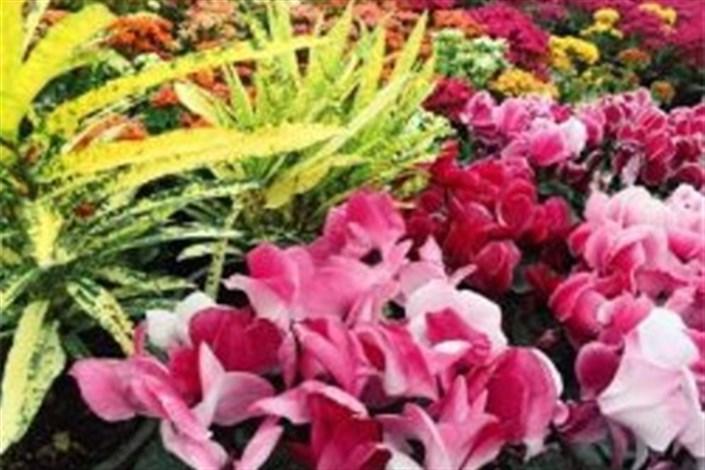 تولید 132 میلیون انواع گل و گیاهان زینتی در محلات