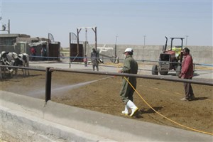 سمپاشی اماکن دامی استان یزد برای مقابله با تب کریمه کنگو