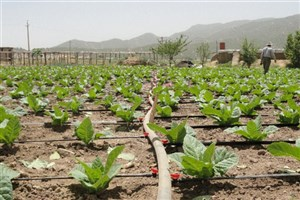 معاون وزیر جهاد کشاورزی:  ۳۲۸۰ میلیارد تومان اعتبار برای طرحهای آبیاری اختصاص یافت