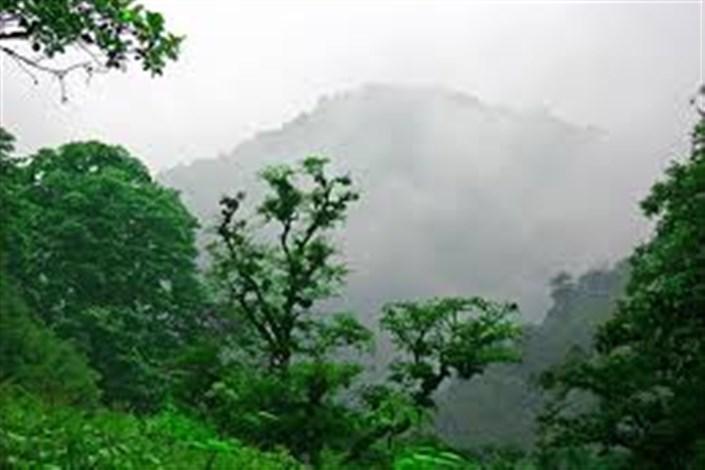 جنگل شمال کشور