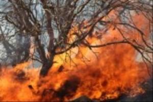 آتش به جان  جوجه ها در پناهگاه حیات وحش میانکاله افتاد