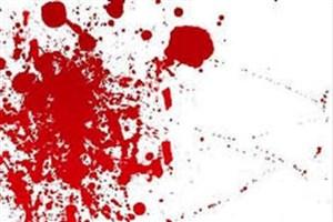 زخمی شدن چوپانی بر اثر حمله خرسی در تیلک/ نجات چوپان توسط سگ گله