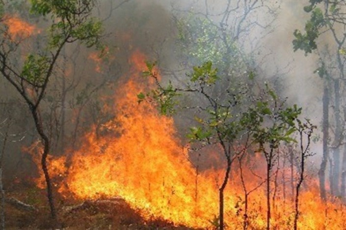 آتش سوزی در جنگل