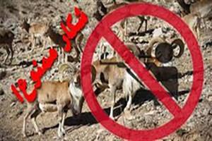 ادامه ممنوعیت شکار پرندگان وحشی در گیلان