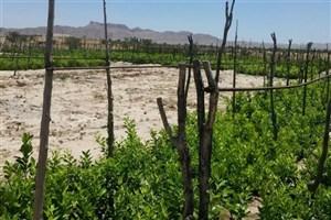مزرعه چند منظوره شهروند جهرمی تجلی اقتصاد مقاومتی