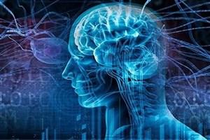 سیگنال مغز در حرکت دادن صندلی چرخدار به کار گرفته میشود