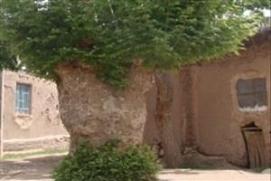 چنار چرمه سرایان  به آثار میراث طبیعی -ملی  پیوست