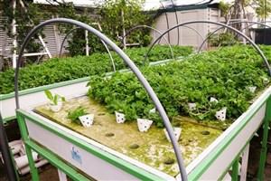 تولید محصولات کشاورزی با مدیریت گلخانه خانگی