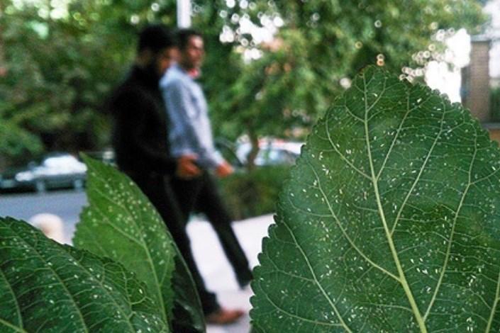 آغاز محافظت از درختان در برابر آفت سفید بالک ها در محله های مرکزی شهر تهران