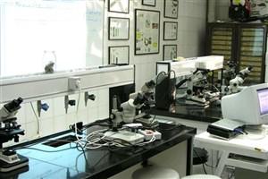 انتقاد به یک الگوی وزارتبهداشت درباره آزمایشگاهها/ ایراد طرح تحول سلامت