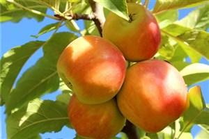 ساخت دستگاه الکترونیکی برداشت میوه مجهز به دوربین