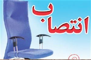 انتصاب مدیرعامل توزیع برق استان تهران