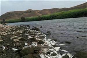 تلف شدن آبزیان رودخانه ارس بر اثر آلودگی زیستی