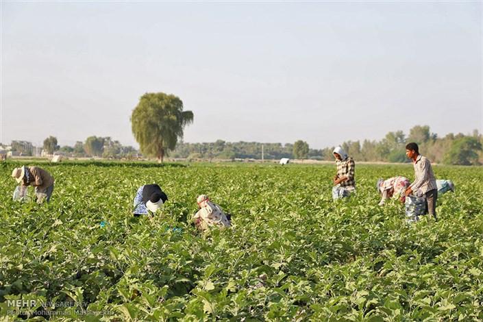 مشاغل کشاورزی