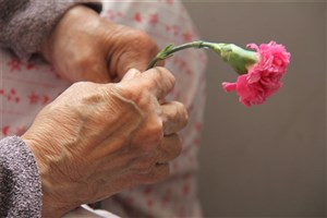 اختصاص ۷۵۰ میلیون تومان به سالمندان تحت پوشش  کمیته امداد استان تهران