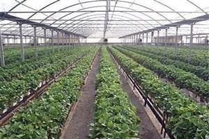 باید نظامهای غذایی پایداری را ایجاد کنیم /بومشناسی کشاورزی برای تغذیه سالم و حفظ محیط زیست ضروری است