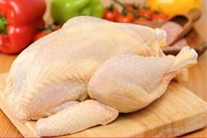 مرغ گران می شود
