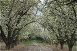 باغ سیب کرج تا پایان امسال به طور کامل احیا میشود