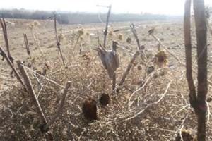 دام های هوایی، بلای جان پرندگان مهاجر در مازندران