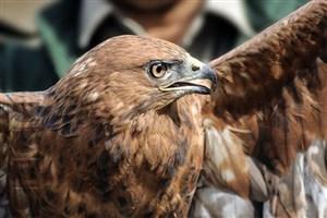 حیوانات تیمار شده در طبیعت مازندران  رها شدند