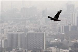 غلظت آلایندههای هوای تهران از فرداکاهش  می یابد/از تردد غیر ضروری خودداری کنید