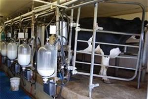ادعای افزایش قیمت شیر بهانهای برای واردات شیرخشک