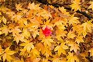برگ های پاییزی به کمپوست تبدیل می شود