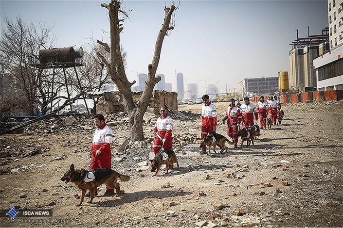 مدرسه سگهای زنده یاب هلال احمر