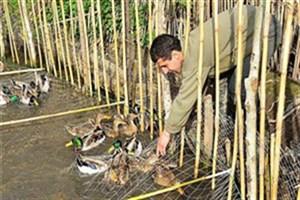 شیوههای غیرقانونی شکار، حیات پرندگان مهاجر را به خطر انداخته است