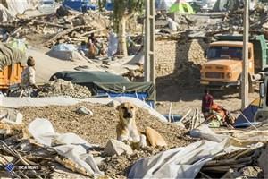 واگذاری پول و مصالح ساختمانی به بازماندگان زلزله