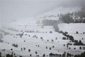 وقوع یخبندان در دشت البرز