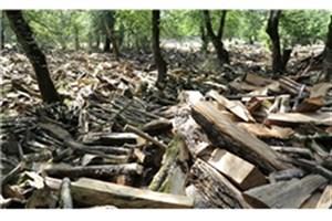 قطع ۲۰۰۰ اصله درخت جنگلی در غرب مازندران
