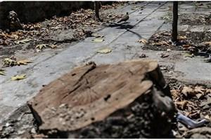 قطع درخت خشک شده محله حکیمیه مجوز نداشته است