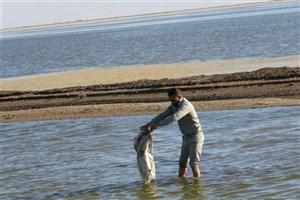 گلایههای فرمانده یگان محیط زیست خوزستان از کمبود امکانات