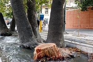 تهران در پیاده راه سازی وضعیت بغرنجی دارد