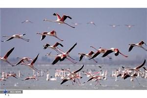 نخستین گروه پرندگان مهاجر میهمان تالاب های فارس شدند