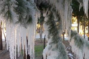 پیشبینی برف و یخبندان در اردبیل/دمای هوا ۱۵ درجه کاهش مییابد