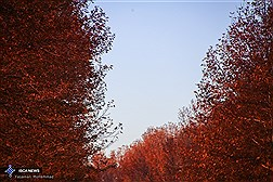 """""""Autumn is a Second Spring when Every Leaf is a Flower"""""""