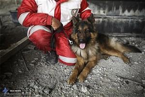 نحوه فعالیت سگهای زنده یاب در زلزله کرمانشاه و حادثه پلاسکو/قیمت جهانی هر سگ زنده یاب چقدر است؟