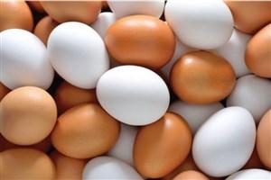مافیای واردات پشت پرده افزایش قیمت تخممرغ