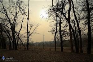 آلودگی هوا جمعیت سوسکهای قرمز را زیاد کرده است