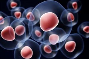 داروی دیابت، سلول های سرطانی را به شیمی درمانی حساس می کند