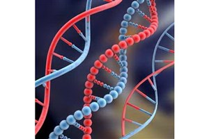 اولین نشست سراسری بانک اطلاعات هویت ژنتیک ایران برگزار می شود