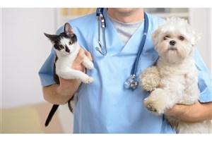 حیوانات خانگی به کووید19  مبتلا نمیشوند/ چه حیواناتی ناقل کرونا میشوند؟